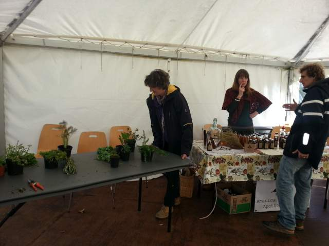 Cultivating herbs stall